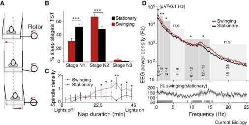 Les effets du bercement pendant la sieste : avantage hamac