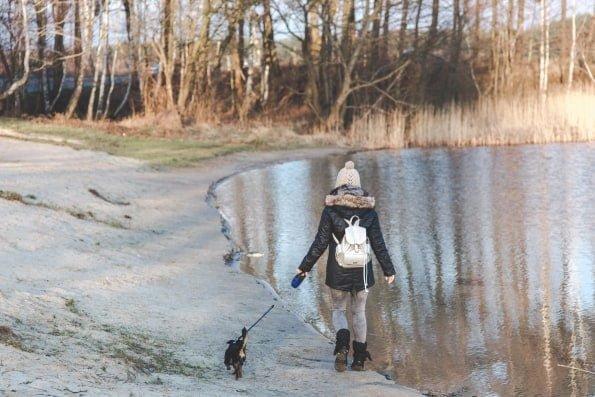 Balade en hiver avec un chien