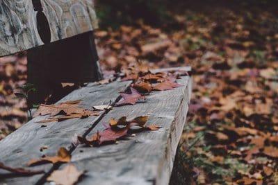 Feuilles mortes sur un banc en automne