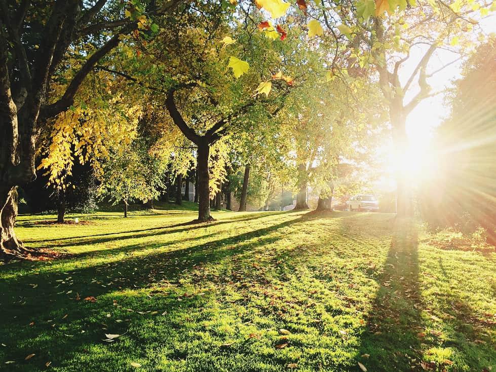 Lumière du soleil sur la pelouse