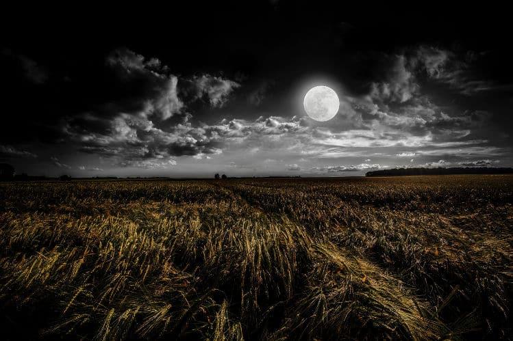 Champ à la lumière de la lune