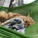 Chat roux endormir sur un hamac