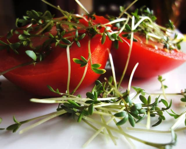 Graines germées sur une tomate